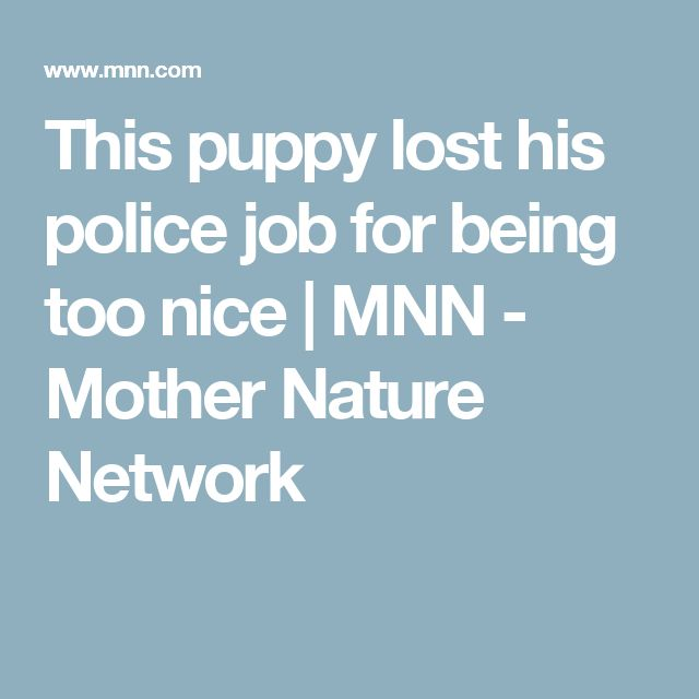 This puppy lost his police job for being too nice | MNN - Mother Nature Network