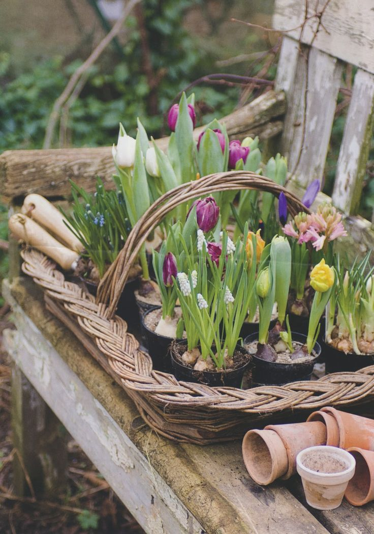 I want my outdoor garden to have the same feel as this photograph: earthy, comfortable, used, lived in, and beautiful.. I love the early Spring tulips! A favorite flower of mine..