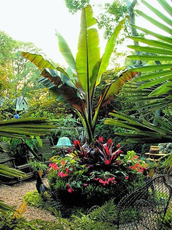 81 best images about warm and tropical gardens on pinterest - Tropical container garden ...