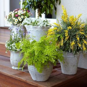 Good idea for back porch! MOSQUITO REPELLING PLANTS Citronella, Lemon Eucalyptus, Cinnamon,