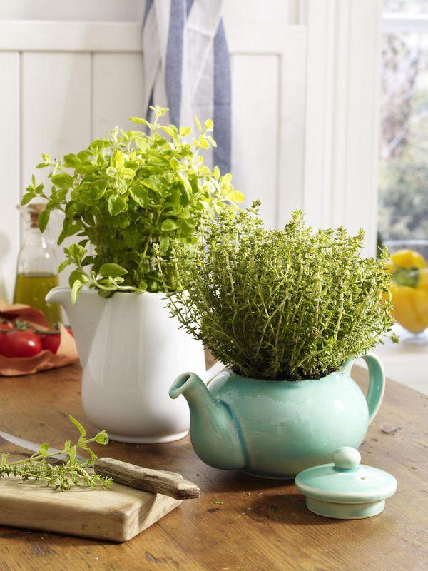 Das brauchen Sie:2 alte TeekannenVerschiedene Kräuter (z. B. Oregano und Minze)So einfach geht's:Kräuter aus den Töpfen nehmen, evtl.