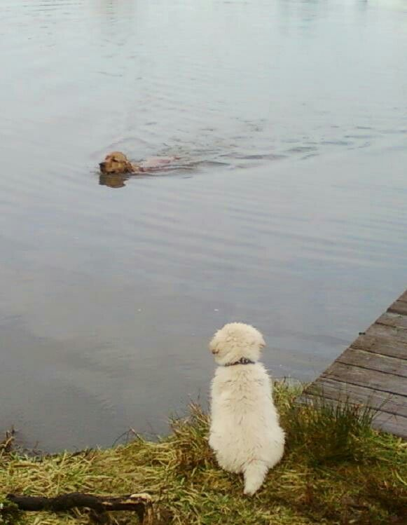 how to get a dog to want to swim