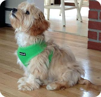1000 images about hypo allergenic doggie on pinterest