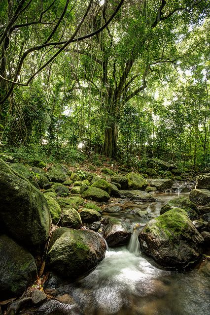 Rainforest in St. Kitts: you get the warm beach/water and rainforest along with fresh water springs...all in the same place #TravelBrilliantly