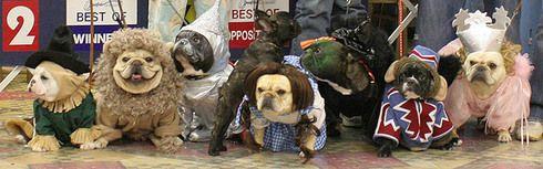funny french bulldog costume - Google Search