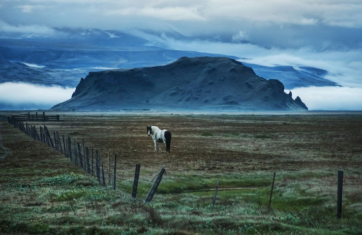 These #horses remind me a bit of the sirens in Odysseus, distracting me from my destination… But, really, that analogy falls apart because I had no destination in mind. #Wik, #Iceland, photo from #treyratcliff at www.StuckInCustom... - all images Creative Commons Noncommercial