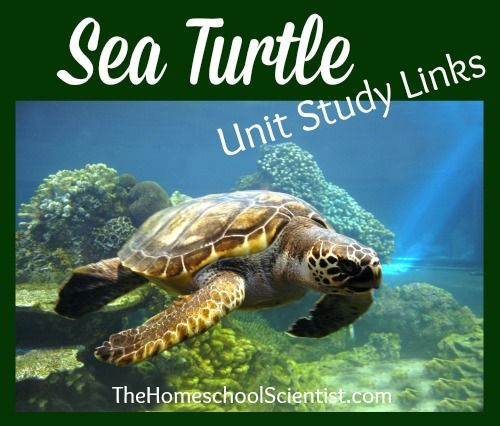 A Case Study Of Sea Turtle Conservation Environmental ...