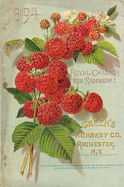 Link to images of the Smithsonian's collection of Seed Catalogs dating back to the 1830's. Easy search by category for vegies, fruits, flowers, etc.