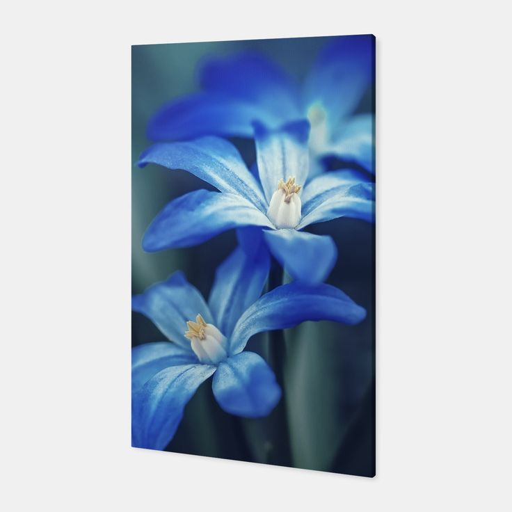 Small Blue Flowers Canvas, Live Heroes
