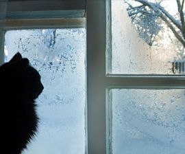 5 Ways to Protect Pets This Winter
