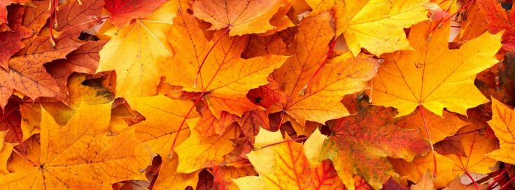 fall leaves images 851x315 | Fall leaves background wallpaper