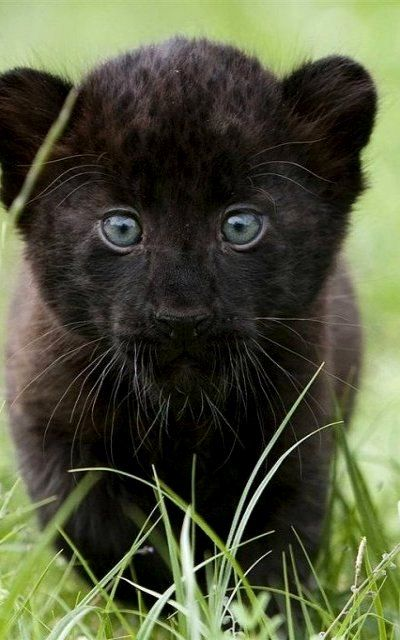Cachorrito negro.                                                                                                                                                                                 Más