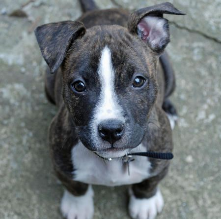 Or this beauty, a Pitbull Terrier Mix