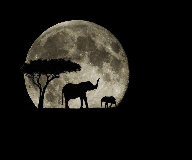 "500px / Photo ""Super Moon Safari"" by Jay Rowe"
