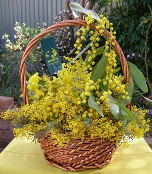 The wattle symbolises the spirit of the mountains,   the valleys, the forests, the rocks and rivers, the golden   warmth of sunshine, the richness of the soil, the wealth   of the minerals of the earth, the burnished sand of the   desert, the yellow native grasses, the setting sun   over endless horizons.