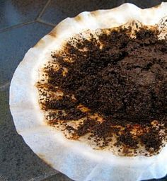 Used coffee grounds as fertilizer for nitrogen-loving plants like camellias, hydrangeas, and roses.
