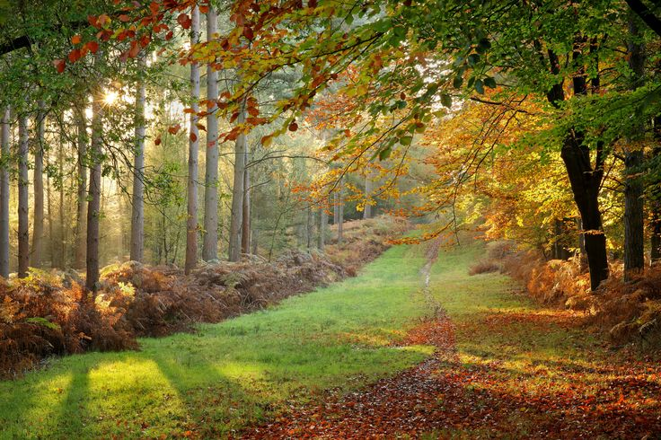 https://flic.kr/p/Aak4Fx | Autumn Forest Glade | © 2015 Alan Mackenzie.  www.alanmackenziephotography.com  Facebook  This scene only works between 15:45 and 16:00 in the last ten days of October. Any earlier and the sun is in the wrong position; any later and most of the leaves have fallen. I tried it last year, but wasn't fully satisfied with the results, due to a slightly too long focal length. I purchased the Sigma 85mm f/1.4 lens this year and it has become my lens of choice for many…