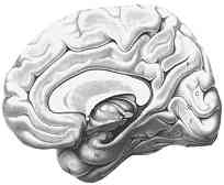 Váš mozek dokáže víc, než si myslíte