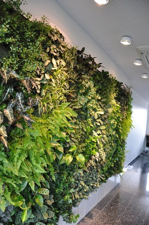 Interior Green Wall In Gym