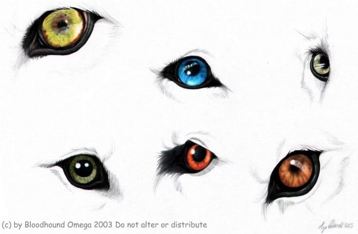 wolf eye drawing step by step | Tutorials | Pinterest ...