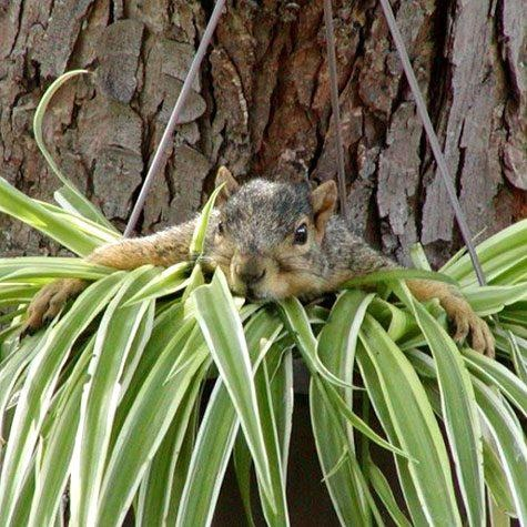 how to keep squirrels away from plants