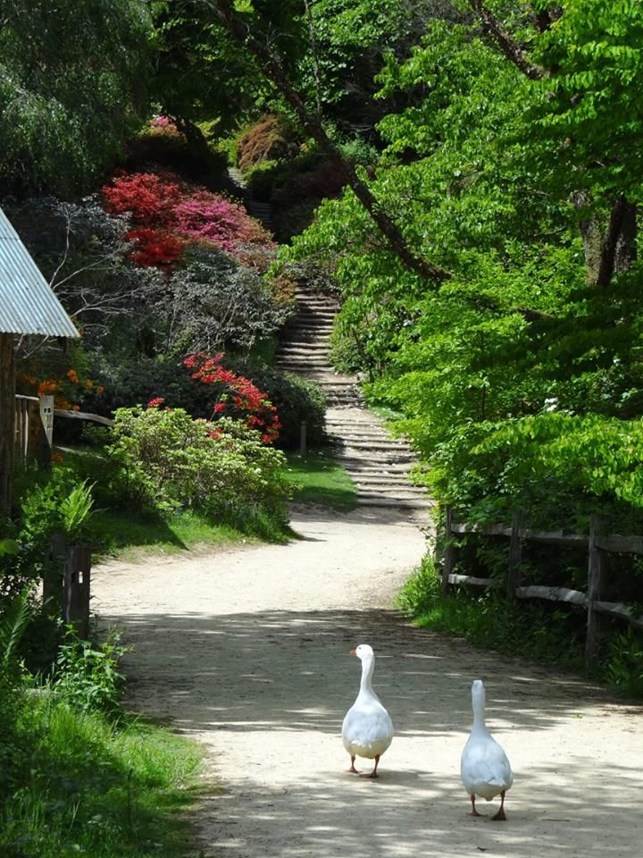 Winkworth Arboretum. Roy Venkatesh