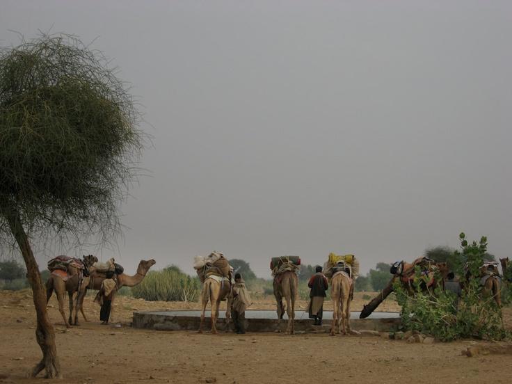 A Desert Oasis Jaisalmer Rajasthan India 8X10 Photograph chamelagiri.etsy.com