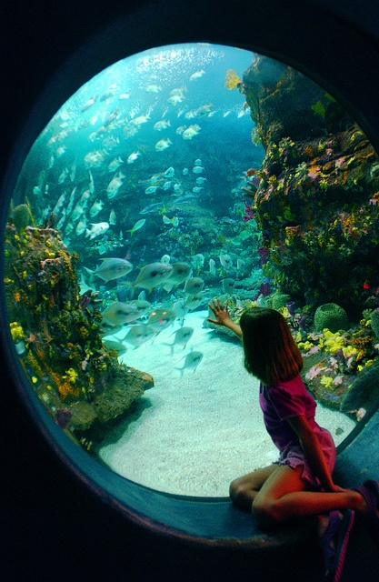 NC Aquarium at Fort Fisher. Visit Fort Bragg Leisure Travel Services for tickets and information. http://www.fortbraggmwr.com/recreation/leisure-travel-services/
