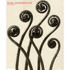 Karl Blossfeldt: Photography。ドイツの植物学者、写真家、教師。 新即物主義を代表する写真家。きっと一番見ている写真集。もうすでにぼろぼろ。事あるごとに開き、あまりにも美しいフォルムの連続に見入り、冷静になっていく。写真に感情が見えない分、結果彼の思惑にすっかりやられてるんじゃないかと思う。自然界に生きる植物からも同様に。ちなみに、私のサインの最後のくるくるはココから。