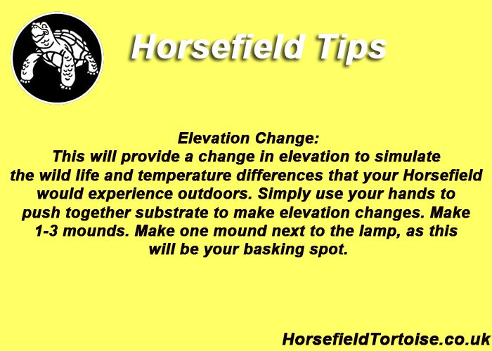 did you know you need to change the elevations in your Horsefield tortoises (also know as russian tortoise) housing?   Check out this tip of the week and then take action and implement this tip for your horsefields housing if it is not already!!!  http://www.horsefieldtortoise.co.uk/course