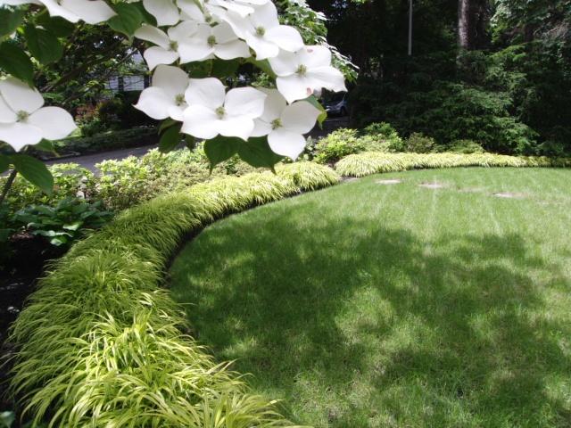 Japanese forest grass landscape ideas pinterest for Japanese ornamental grass