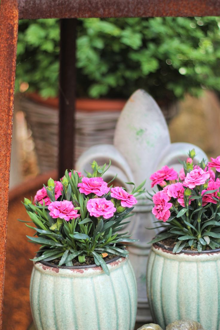 25+ Best Ideas About Gartenausstellung On Pinterest ... Moderne Gaerten Trends Blumenausstellung