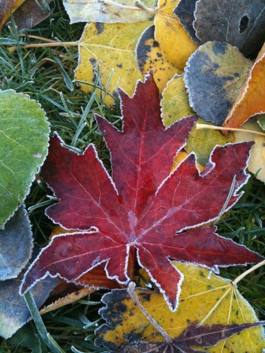 ✯ O Canada