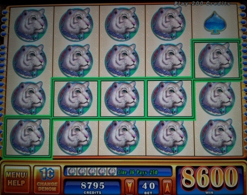 Wizard spins slot (WMS gaming) You can find hundreds of Big Win pictures and videos here: http://www.bigwinpictures.com