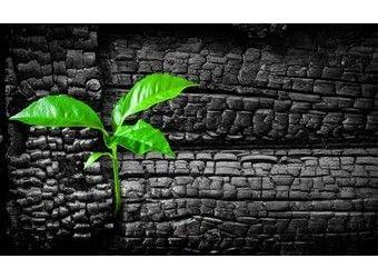 charbon actif vegetal indispensable da sa pharmacie
