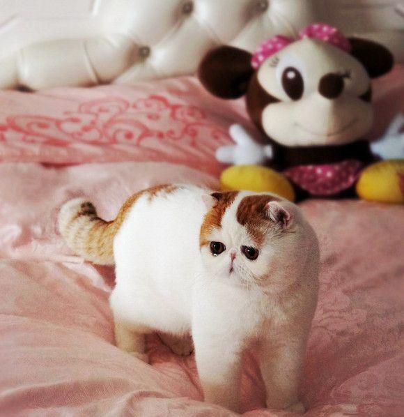 Snoopy Cat <3 HERMOSO GATO.