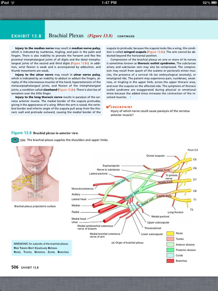 36 best Chapter 13, The Spinal Cord and Spinal Nerves images on ...