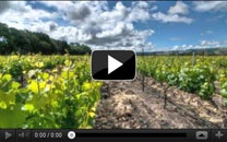 Sangiacomo Family Vineyards Story. Every day, we come in from the fields and brush the dust off our jeans—the same dust Vittorio and Maria Sangiacomo claimed when they purchase this land more than 80 years ago. Growing-up on the ranch meant developing an appreciation for what our family put into it. Not only regarding the cultivating of the best grapes possible, but a true and unwavering desire to carry on the tradition. That's what legacy is all about. Sonoma Valley, CA.