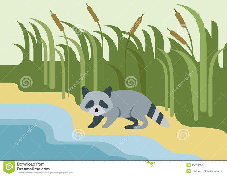 raccoon-flat-design-cartoon-wild-animal-bank-river-zoo-children-collection-45353693.jpg (1300×1009)