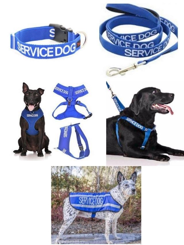 Details About Colour Coded Dog Warning Awareness Service Dog