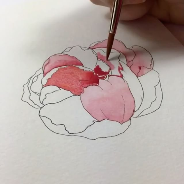 Finally understanding how to draw a peony thanks to Jenna over at @monvoirco! Paper: Canson 140lb Brush: Grumbacher 6 round Paint: @daler_rowney Aquafine Travel Set