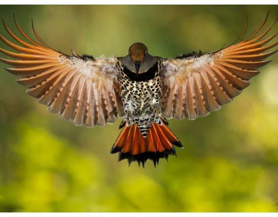 Крыло птицы фото 1 | Летающая птица, Обои с птицами и ...