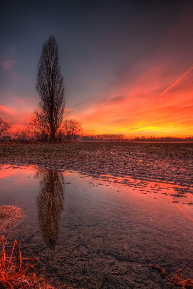 Sunset tree, Slovakia