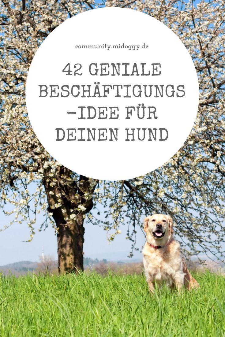 Hund || Beschäftigung || Ideen || Tipps || Hunde || Auslastung