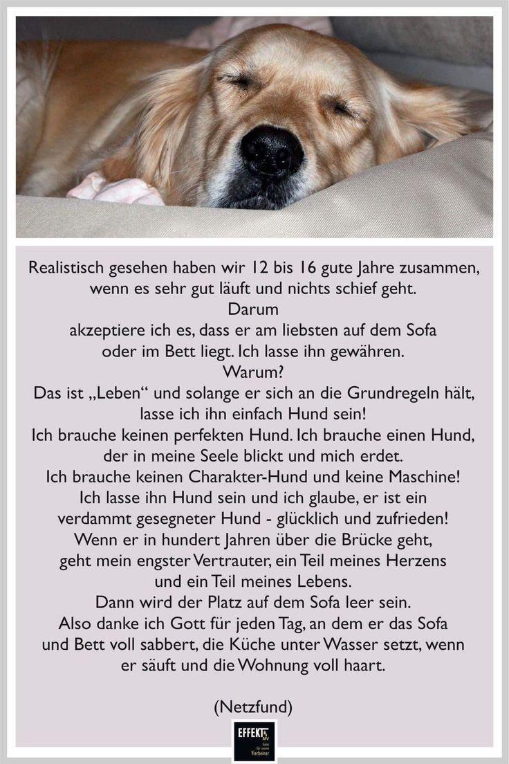 Notitle Dogs Dogs Notitle Tiere Spruche Tiere Zitate Tiere Hunde Gedichte