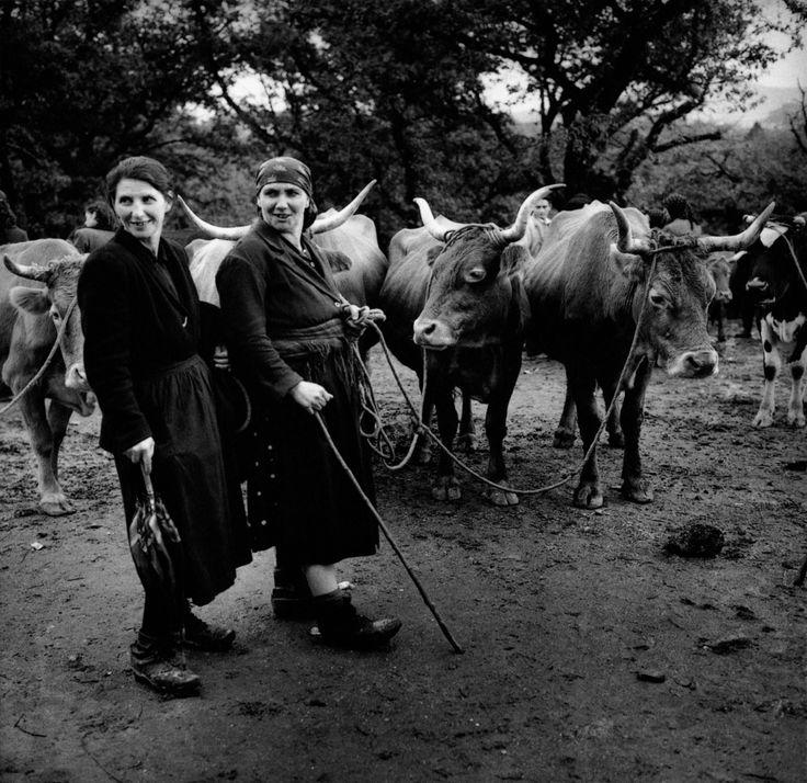 Hasta 1971, la Feira del ganado se celebraba en la Carballeira de Santa Susana ubicada en pleno corazón de Santiago de Compostela. Foto año 1958