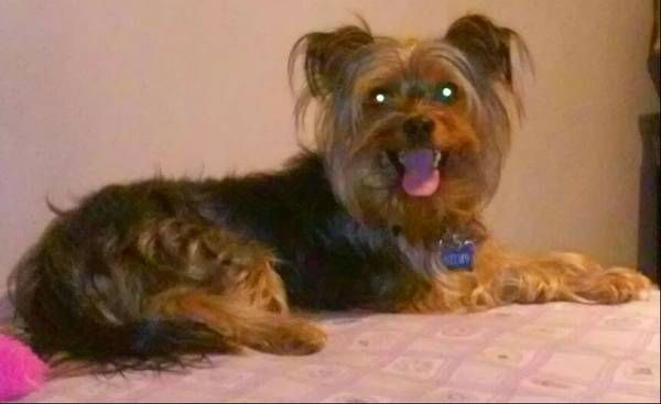 1000+ images about Lost Dogs MA on Pinterest