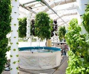 several examples of high yield/commercial systems (including these towers of basil, amazeballs)