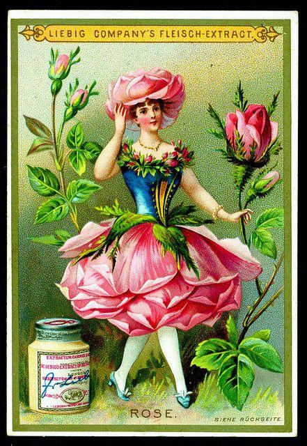 Liebig S268 - Flower Girls 1890 - Rose by cigcardpix, via Flickr