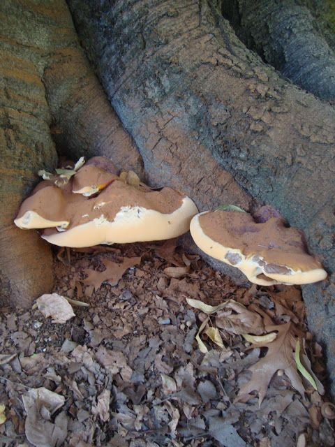 Funghi lignicoli http://lefotodiluisella.blogspot.it/